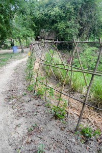 การใช้ประโยชน์จากหญ้าแฝกในระบบการปลูกพืช