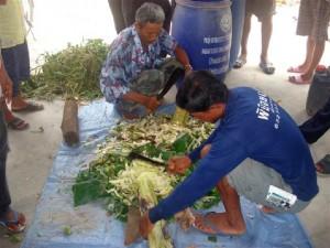 การทำผักเสี้ยนผี